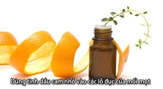 Tinh dầu cam có có chứa thành phần gây độc hại và tổn thương cho loài mối mọt