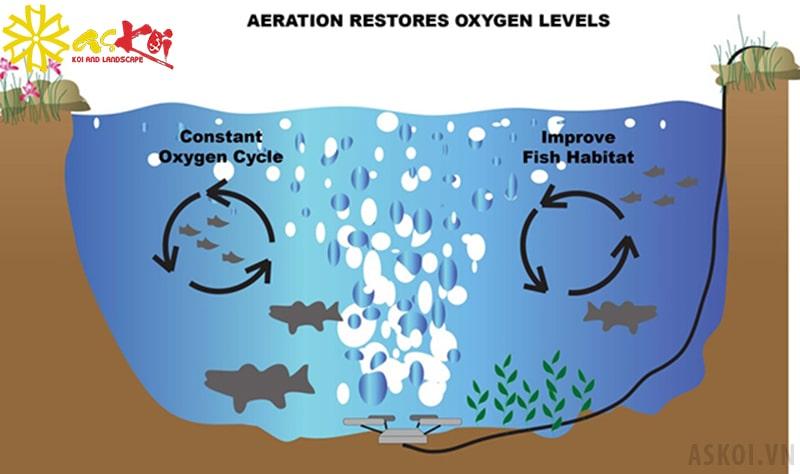Nguyên lý tạo oxy hồ koi bằng cách sử dụng oxy trong các bong bóng khí
